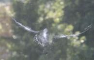 birdsplat3